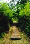 Grief Path